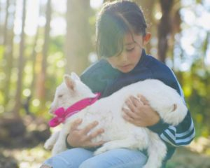 ヤギとふれあう女の子の写真